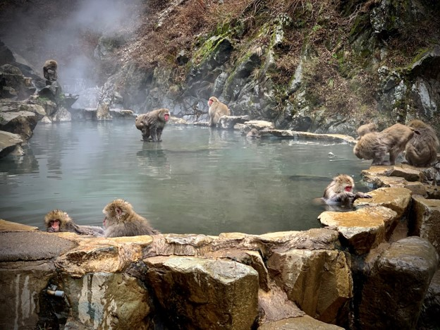 Experiencing the Hot Spring Spa Loving Snow Monkeys of Japan